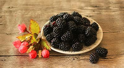 易胜博特点黑莓【绿色生活】论黑莓的营养价值